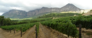 idiom-vineyards-and-mouintains